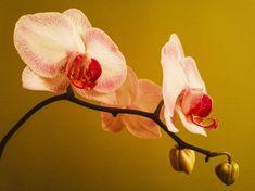 Hogyan neveljünk orchideát cserépben? - Bidista.com - A TippLista! Illustration, Flowers, Indoor House Plants, Water, Illustrations, Royal Icing Flowers, Flower, Florals, Floral