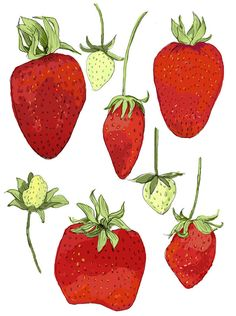 Fresh Strawberries Illustration Reproduction 8 x 10. $15.00, via Etsy.