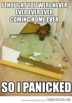 Dog Logic at Its Finest - Funny Baby - Separation Anxiety Dog. The post Dog Logic at Its Finest appeared first on Gag Dad. Fu Dog, Dog Cat, Pet Pet, Funny Animal Pictures, Funny Animals, Funny Photos, Animal Memes, Animal Quotes, Dog Quotes