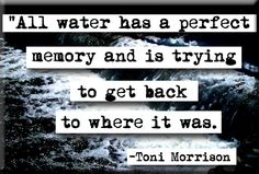All water has a perfect memory and is trying to get back to where it was.