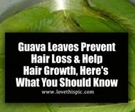 Guava Leaves Prevent Hair Loss & Help Hair Growth, Here's What You Should Know