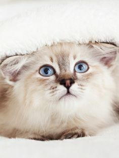 Amikor a macskám beteg volt, az állatorvos figyelmeztetett, hogy a fertőzésveszély miatt inkább ne engedjem most az ágyamba. A probléma csak az volt, hogy a cica egyetlen egyszer sem kérte az engedélyemet, mielőtt a párnámra pattant volna. Jó, ha tudod, hogy a szabályok és óvintézkedések csak téged érdekelnek, a macskád nem fogja a véleményedet kérni, mielőtt cselekszik.