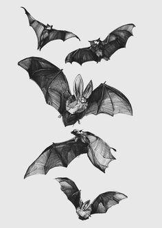 Bats illustration for Soft Gallery Clothing, Copenhagen - www. Murcielago Animal, Illustrations, Illustration Art, Bild Tattoos, Desenho Tattoo, Vampires, Art Inspo, Art Reference, Cool Art