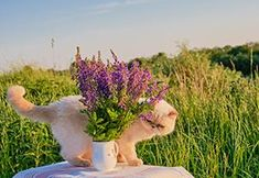 If You Have a Pet, Get Rid Of These Plants Immediately! - The Lost Herbs Backyard Plants, House Plants, Owning A Cat, Public Garden, Daffodils, Planting Flowers, Your Pet, Rid, Lost