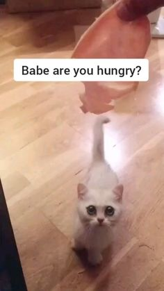 Funny Cute Cats, Cute Baby Cats, Cute Little Animals, Cute Cats And Kittens, Cute Funny Animals, Funny Dogs, Cute Dogs, Animal Humour, Funny Animal Jokes