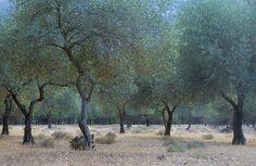 fuckyeahsardinia:  Olive trees, Sardinia   by tuna bites on Flickr Hudson River School, Olive Tree, Sardinia, Italy Travel, The Dreamers, Travel Inspiration, Tuna, Island, Explore