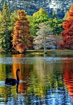 Peace is better than war Beauties to peak at peace Animals teach peace We're still fighting Amazing Beautiful lovely pictures Love Nature Beautiful World, Beautiful Images, Beautiful Forest, Beautiful Birds, Belle Image Nature, Landscape Photography, Nature Photography, Autumn Scenery, Autumn Lake
