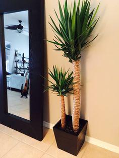 IKEA indoor Yucca Plant in Graset plant pot Water Plants Indoor, Indoor Plant Pots, Potted Plants, Plant Decor, Office Plants, Interior Plants, Garden Boxes, Design Your Home, Home Decor Ideas