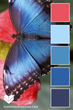 Color palettes 493144227950719867 - Color Palette: Insect Inspiration — Paper Heart Design Source by felixiaw Color Schemes Colour Palettes, Nature Color Palette, Blue Colour Palette, Color Combos, Blue Color Pallet, Palette Design, Colours That Go Together, Blue Morpho, Polychromos