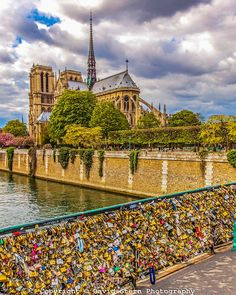 Notre Dame Cathedral | David Stern Photography