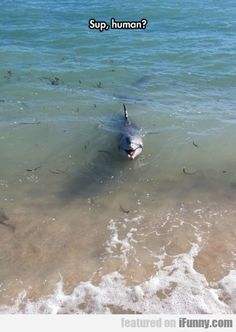 Funny pictures about Dolphin Saying Hi. Oh, and cool pics about Dolphin Saying Hi. Also, Dolphin Saying Hi photos. Animal Captions, Cute Animal Memes, Cute Funny Animals, Funny Animal Pictures, Cute Baby Animals, Funny Cute, Animals And Pets, Random Pictures, Stupid Animals