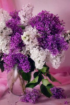 bouquet of Lilacs Lilac Flowers, My Flower, Pretty Flowers, Spring Flowers, Lilac Bushes, Floral Bouquets, Wedding Bouquets, Amazing Flowers, Trees To Plant