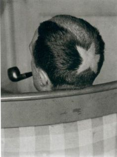 Surrealist Costume Idea : Marcel Duchamp by Man Ray, 1920 Man Ray, Louise Brooks, Philippe Sollers, Hans Richter, Hans Arp, Non Plus Ultra, National Portrait Gallery, Harlem Renaissance, Action Painting