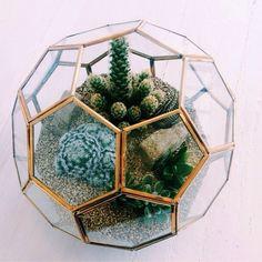 cactus in a glass terrarium:):) Garden Terrarium, Glass Terrarium, Garden Plants, Cactus Terrarium, Glass Cactus, Indoor Garden, Indoor Plants, Plants Are Friends, Cactus Y Suculentas