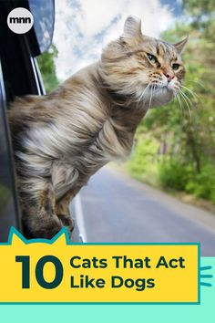 6399b43eaa952 1927 Best Cats Rule images in 2019 | Pretty cats, Beautiful cats ...
