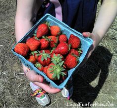 10 Tips For Picking Fresh Fruit and Vegetables Locally - Home - LocalFunForKids Best Blogs for Local Fun, Easy Recipes, Crafts & Motherhood