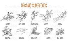 Superfood vintage hand drawn set - Illustrations