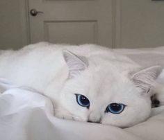 So pretty eyes!  #cobythecat