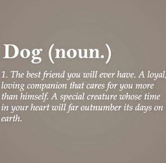 Image result for definition best friend quotes: DOG