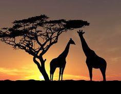 Siesta Bushveld Break Away