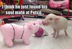 Funny Animals of The Day | 43 Pics - Funoramic