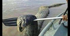 UNIDENTIFIED RIVER MONSTER