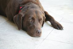Dog Day Afternoon - A Friends with Benefits Treasury by Cherie on Etsy