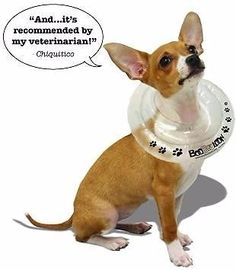 Find Pet Accessories in Randburg! Search Gumtree Free Classified Ads for Pet Accessories and more in Randburg. Gumtree South Africa, Pet Accessories, Baby Animals, Recovery, French Bulldog, Collars, Safety, Pet Products, Cats