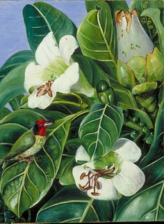Foliage and Flowers of a Forest Tree of Java by Marianne North Location: Java Plants: Jack, Fagraea auriculata Animals: Megalaema © Kew Gardens, London http://www.kew.org/mng/gallery/plant-portraits