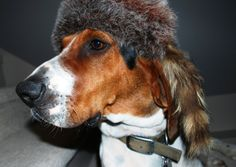 Pictures of Treeing Walker Coonhound Dog Breed this is funny! Treeing Walker Coonhound, Pet Dogs, Dogs And Puppies, Pets, Walker Hound, Picture Tree, Cute Baby Dogs, The Fox And The Hound, Dog Crafts