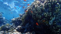 Sharm El Sheikh, Outdoor, Camera, Pisces, World, Pictures, Outdoors, Outdoor Games, The Great Outdoors