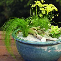Bring home the beach! Create your own beach garden in a pot.