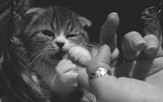 So sweet. wittle hungry baby cat