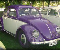 Purple and white bug