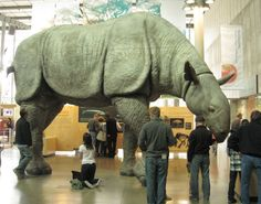 A scale model of Paraceratherium 😲 Paraceratherium is a genus of hornless rhinoceros, and one of the largest terrestrial mammals that has… Prehistoric Wildlife, Prehistoric World, Prehistoric Creatures, Dinosaur Fossils, Dinosaur Art, Dinosaur Stuffed Animal, Vida Animal, Extinct Animals, Fauna
