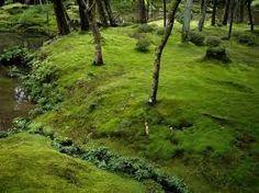 jardin de musgos en kioto - Buscar con Google