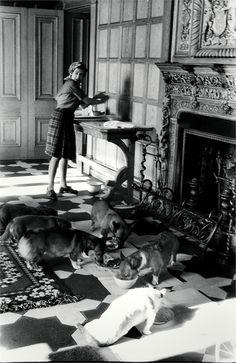 The Queen feeding her corgis, Balmoral, 1976 #corgi