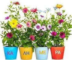 Good Morning Messages Friends, Night Pictures, Planter Pots, Plants, Pond, Magic, Cover, Ideas, Decor