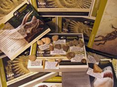 LOW INTRODUCTORY PRICE – Fossils for Children « Delay Gifts