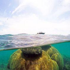 I'll take your swimming pool and raise you a pristine secluded reef all to yourself....   #greatbarrierreef #haggerstoneisland #haggerstone #thisisqueensland #tropicalnorthqueensland #exploreTNQ #queensland #seeaustralia #australiagram #visitqueensland #discoverqueensland #endlesssummer #mermaid #exploremore #exploreaustralia #travelgram #travelstories #traveladdict #islandlife #openmyworld #bucketlist #heavenonearth #globetrotter #natureaddict #dreamdestination #wonderful_places #underwater…