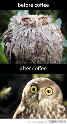What happened to that poor bird on the top??? Lol. #meme check out WWW.FAILIOUS.COM for funny things.