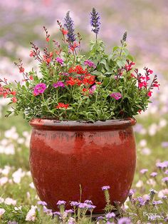 Want to support the bees, hummingbirds, and butterflies but don't have space for a full garden? Try these containers filled with pollinator-friendly plants.