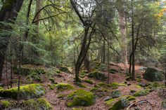 In the woods of the Yosemite valley California [2000x1333] [OC]