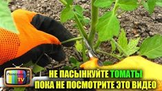 Видеоролик Small Farm, Farm Gardens, Youtube, Mad, Tomatoes, Youtube Movies