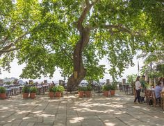 Nice square in Makrinitsa to cool down in summer and enjoy a coffee with marvellous view down to Volos ❤️
