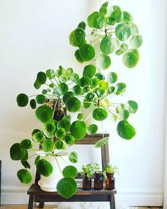 64 plant stand design ideas for indoor houseplants 15 - coodecors Potted Plants, Garden Plants, Indoor Plants, Foliage Plants, Big Plants, Hanging Plants, Easy House Plants, Indoor Herbs, House Plants Decor