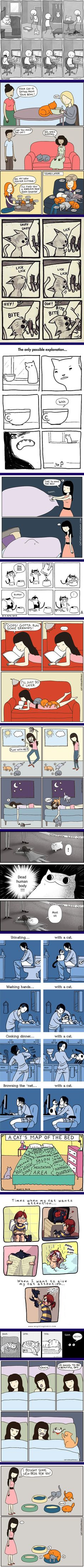 15 Funny Comics Reveal The Reality Of Owning A Cat