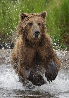 Brown bear  by Charles Glatzer on 500px