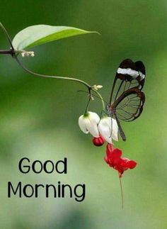 Good morning images for love Good Morning Nature Images, Good Morning Sun, Good Morning Arabic, Good Morning Beautiful Pictures, Good Morning Cards, Good Morning Beautiful Images, Good Morning Picture, Good Morning Greetings, Morning Pictures