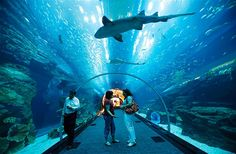 Image: Visitors looks up as fish swim in the aquarium tunnel in Dubai Mall (© AHMED JADALLAH//Reuters)